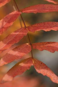 New Fall Color Photographs